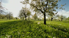 spring trees. grass field. plants nature background. summertime. aerial view - stock footage