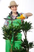 Woman gardener trimming plans on white Stock Photos