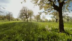 springtime trees. plants nature background. summertime. aerial view - stock footage