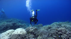 Diver interacting with wildlife swimming on shallow coral reef in Solomon Stock Footage