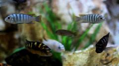 Fish in Aquarium - stock footage
