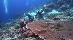 Ocean scenery table coral, expert divers with perfect buoyancy shooting macro, Stock Footage