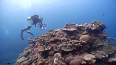 Ocean scenery drifting over nice reef, on beautiful healthy and diverse reef, Stock Footage