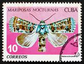 Stock Photo of Postage stamp Cuba 1979 Heterochroma, Nocturnal Butterfly