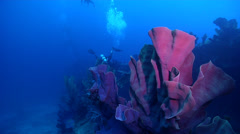 Expert diver with perfect buoyancy swimming on wreckage with Elephant ear sponge Stock Footage