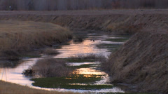 Refuge Stream at Bosque del Apache National Wildlife refuge in New Mexico Stock Footage