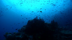 Ocean scenery deep bommie at Mellow Yellow, looks very deep, on deep coral reef, - stock footage
