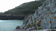 Seagulls Standing on Guernsey Shore Stock Footage