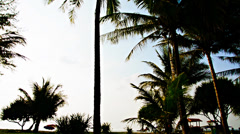View of palm trees on the background horizon Stock Footage