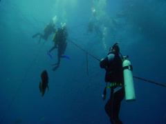 Chaotic hoard of scuba divers descending in bluewater, HD, UP19662 Stock Footage