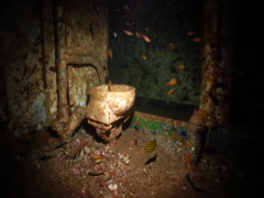Ocean scenery toilet bowl and cardinalfish, on wreckage, HD, UP19692 Stock Footage