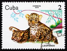 Postage stamp Cuba 1979 Leopards, ZOO Animals - stock photo