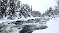 Fast flowing river winter snow spruce forest Juuma Oulanka Nat Pk Finland Stock Footage