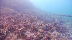 Anchor chain moving around causing significant damage to the reef, underwater, Stock Footage
