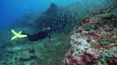 Lone diver swimming on deep coral reef with Slender cardinalfish in Australia, Stock Footage