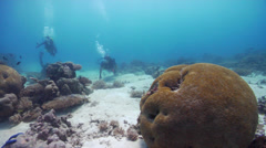 Group of scuba divers swimming on sand and reef in Australia, HD, UP20091 Stock Footage