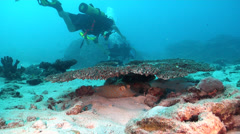 Divers only in part of shot on sand and reef with Blue-spotted lagoon ray in Stock Footage