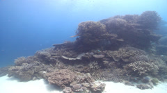Ocean scenery poor visibility, sand blown-out exposure, on shallow coral reef, Stock Footage