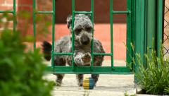 Very Funny Dog ​​Slipped Through The Fence And Took Out Her Toy Stock Footage