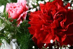 carnation bouquet - stock photo