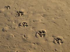 Footprints of a dog on the sandy beach Stock Photos