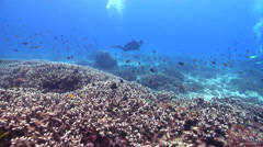 Ocean scenery great visibility, on shallow coral reef, HD, UP20374 Stock Footage