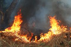 fire on dry grass and trees - stock photo