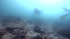 Star pufferfish swimming on shallow coral reef, Arothron stellatus, HD, UP20487 - stock footage
