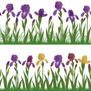 Flowers iris and grass, set seamless Stock Illustration