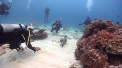 Diver chases critter away swimming on shallow coral reef with Cleaner wrasse - stock footage