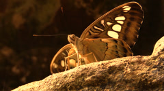 Details of a butterfly Stock Footage