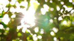 Sunlight Solar Power through leaves and branches of a tree 1 Stock Footage