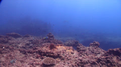 Ocean scenery fairly barren reef, strong surge, on rocky reef, HD, UP20836 Stock Footage