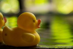 Duck toy on water Stock Photos