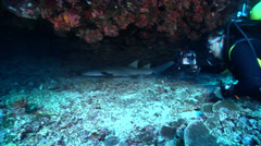 Nurse Shark waking up on deep coral reef, Ginglymostoma cirratum, HD, UP20964 Stock Footage