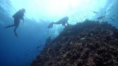 Group of scuba divers on shallow coral reef in Galapagos Islands (Ecuador), HD, Stock Footage