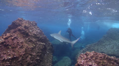 Galapagos shark swimming on rocky reef, Carcharhinus galapagensis, HD, UP21531 Stock Footage