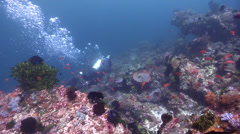 Ocean scenery female diver easily swimming upcurrent, on shallow coral reef, HD, Stock Footage