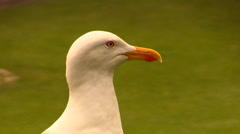 Close up head of gull Stock Footage