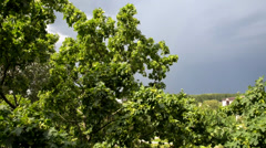 storm with wind - stock footage