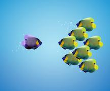 Big angelfish leading group of angelfish Stock Photos