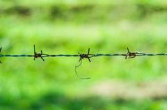 old barb wire on green background - stock photo