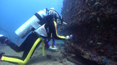 Scientific diver in Australia, HD, UP22634 Stock Footage
