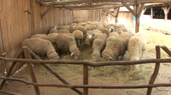 Sheep in a wooden pen - stock footage