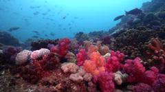 Ocean scenery surge makes it a bit shakey, on rocky reef, HD, UP22690 Stock Footage