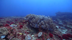 Ocean scenery soft coral, red algae, surge, on rocky reef, HD, UP22751 Stock Footage