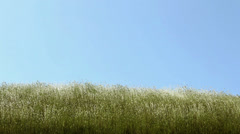 Grass waving on wind upon blue sky Stock Footage