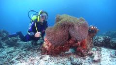 Female model scuba diver on rubble with Magnificent sea anemone in Australia, Stock Footage