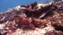 Ocean scenery unexploded bomb covered in red algae, ammunition, on shallow coral Stock Footage