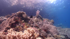Ocean scenery snorkeller just in shot, on shallow coral reef, HD, UP23876 Stock Footage